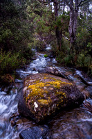 Hugel River, Cradle Mtn Lake St Clair National Park